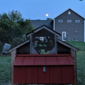 Should Chickens Have A Light On At Night?