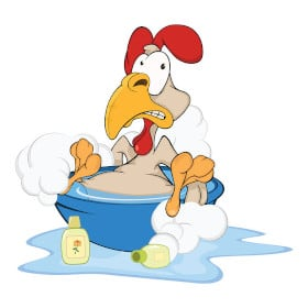 Will Chickens Bathe In Water?